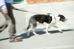 Walking the dog Royalty Free Stock Photography