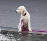 Walking dog in nature Royalty Free Stock Photos