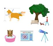 Walking with a dog in the park, combing a dog, a veterinarian`s office, bathing a pet. Vet clinic and pet care set. Collection icons in cartoon style vector Stock Photos