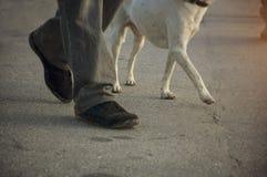 Walking the dog Stock Photography