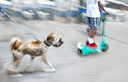 Walking the dog on the street Stock Photography