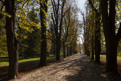 Walking the dog at Tivoli Park in Ljubljana. The capital of Sloveniam, in a sunny morning of Autumn Royalty Free Stock Images