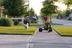 Walking the Dog with Tricycle in the Neighborhood Stock Photography