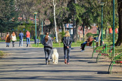 Walking with the dog. Two girls walking in the city park with white dog in a sunny day Stock Photos
