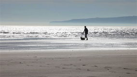 Walking the dog. Video footage of a senior man walking his dog along the shoreline in a dusky sandy beach scene. Camber Sands, East Sussex, UK stock video footage