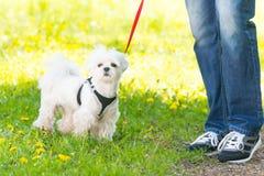 Walking with dog Royalty Free Stock Image