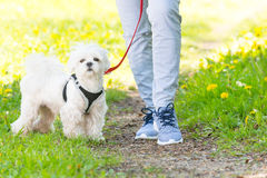 Walking with dog Royalty Free Stock Photos