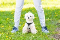 Walking with dog Stock Image