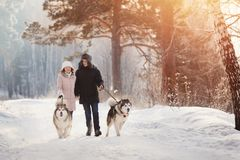 Walking with dog in winter. loving couple is walking in snow. Girl and men is playing, run with dog in snow, New Year`s holidays, rest in nature in winter stock photography