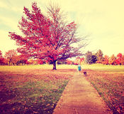 Walking the dog. A woman walking her dog in a park during autumn Royalty Free Stock Photos