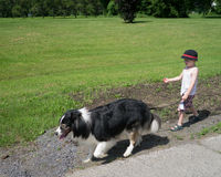 Walking the Dog. A young boy taking control of the lease and walking the dog in a park Stock Image