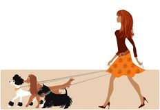 Walking with dogs. Young lady walking with three dogs Stock Illustration