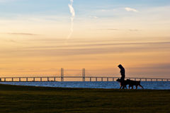Walking the Dogs. A person walking the dogs at sunset. Malmö, Sweden Royalty Free Stock Photos