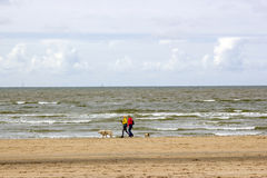 Walking with dogs on the beach in the Netherlands. NOORDWIJK, NETHERLANDS - MAI 25 2015: walking with dogs on the beach in the Netherlands Royalty Free Stock Photos