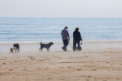 Walking the dogs on the beach royalty free stock photos
