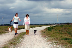 Walking dogs on country road Royalty Free Stock Photo