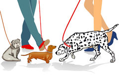 Walking dogs Royalty Free Stock Photo