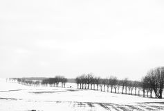 Walking with dogs. Lohmen, Germany - February 12, 2017: Minimalistic black and white of a valley covered with snow with row of trees and people walking with dogs Stock Photo