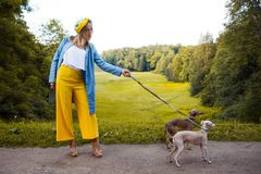 Walking dogs, pet care. Dog breed Italian Greyhound. Walking dogs, pet care. Dog Italian Greyhound Royalty Free Stock Photography