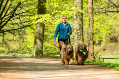 Walking dogs Stock Images