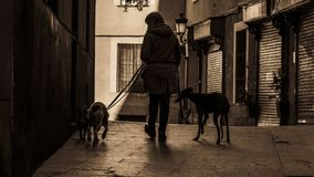 Walking the dogs in the streets of old Madrid. In the area of Madrid de los Austrias Royalty Free Stock Image