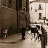 Walking the dogs in the streets of old Madrid. In the area of Madrid de los Austrias Royalty Free Stock Images