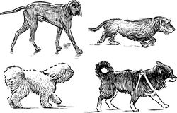 Walking dogs. Vector drawings of the various dogs vector illustration