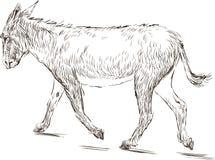 Walking donkey Stock Images