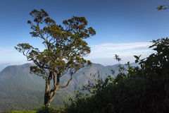 Walking down Adam`s Peak on Sri Lanka.  Stock Images