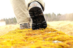Walking Down the Moss Path. Closeup shot of rough hiker boots on the path covered with moss Stock Photography