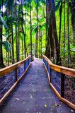Clear perspective of stairway in the middle of rain forest tropical jungle trees royalty free stock photography