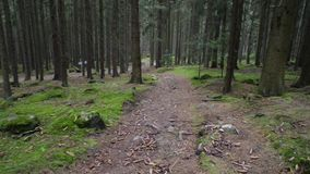 Walking down a rocky pathway in dark pine spruce forest stock footage