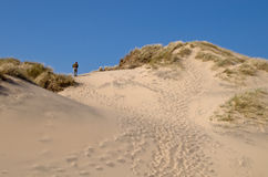 Walking in the Dunes royalty free stock image