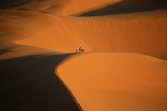 Walking on dunes. A couple with a dog are walking on a dune in the moroccan sahara Royalty Free Stock Photo