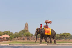Walking elephant in Ayutthaya Royalty Free Stock Image