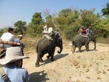 Walking Elephant. Safari - park near the resort town of Hua Hin in Thailand royalty free stock photo