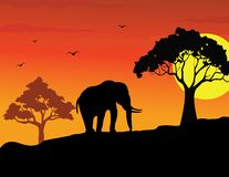 Walking elephant silhouette Stock Photography