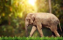 Walking elephant on sunny background. Walking elephant on sunny green background royalty free stock photo