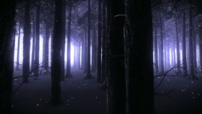 Walking through an enchanted forest at night video