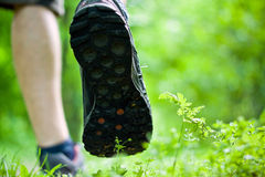 Walking exercise in summer forest Stock Photography