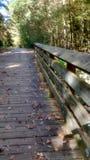 Walking into Fall Stock Image