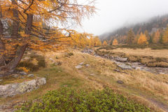 Walking at fall in a cloudy day next to a mountain stream Royalty Free Stock Photos