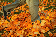Walking through fall leaves 1. Feet walking through brightly colored fall leaves on the ground Royalty Free Stock Photo