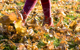 Walking through  fall leaves Royalty Free Stock Photography