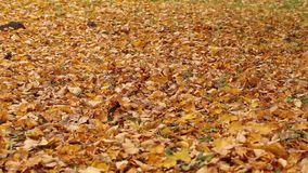 Walking on fall leaves stock video footage
