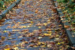 Walking on fall leaves Royalty Free Stock Photography