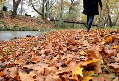 Walking on fallen leaves. Capture of fallen autumn leaves beside a small stream and a woman walking royalty free stock photo