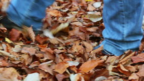 Walking on fallen leaves in the forest. / Steady Footage shot with dolly stock video footage