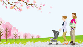 Walking family with Baby Stroller ,full bloom cherry trees -EPS10 Royalty Free Stock Photos