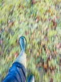 Walking feet in autumn Stock Images